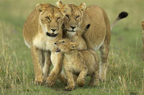 imagenes animales viviparos 191 cu 225 les son los animales viv 237 paros 187 respuestas tips