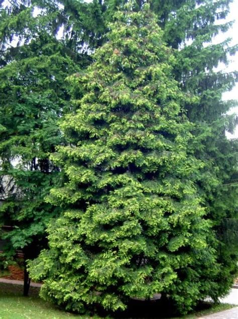28 best ornamental deciduous trees russell s photo gallery plants 187 trees deciduous