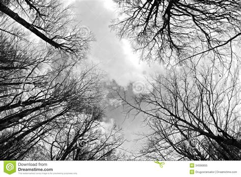 white black forest forest royalty free stock photo image 34590655