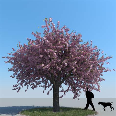 cherry tree 3ds max max realistic cherry tree