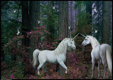 imagenes de animales unicornios ping pong ping pong en photoshop y otras herramientas tico