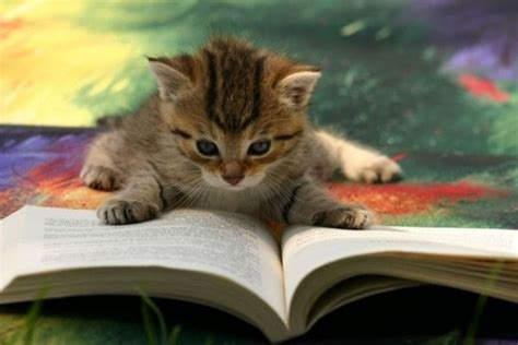 i cats books cats also enjoy reading books 18 pics 1 gif picture