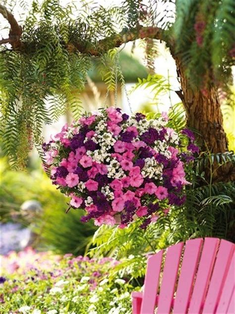 Flowers For Hanging Planters by Hangingbasket Jpg 1395864242