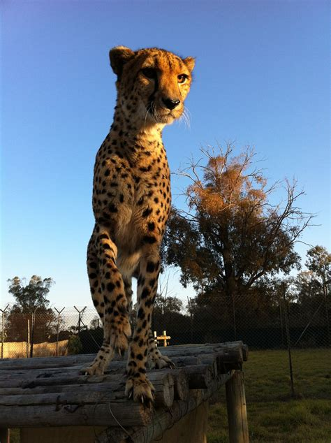 lion park wikipedia