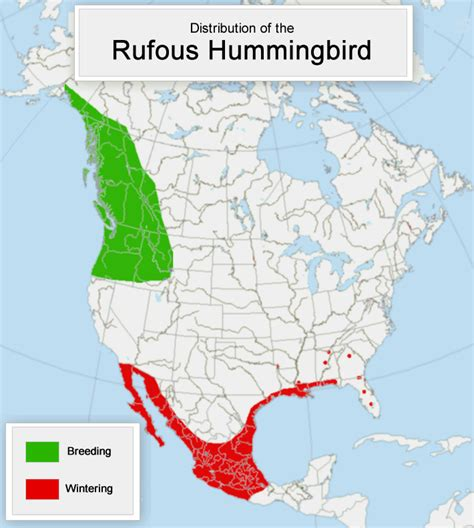 rufous hummingbird migration temperature patterns and timing