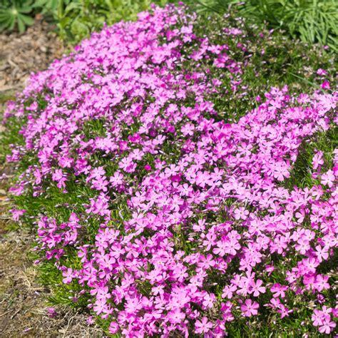 vorgarten bepflanzung vorgarten mit bodendeckern bepflanzen 187 diese eignen sich