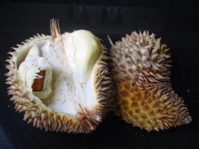 durian king  fruits world crops  tropical