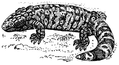 file gila monster psf png wikimedia commons