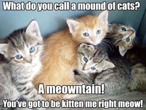 cat puns cat puns miraculous ladybug  cat puns