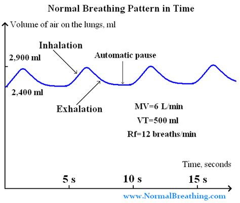 breathing pattern video normal respiratory frequency volume