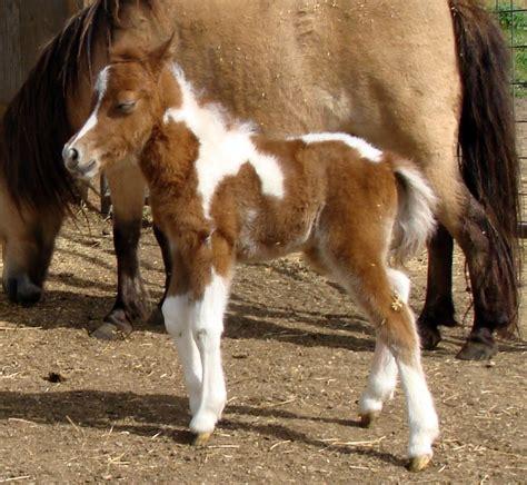 Joe Rabbit Bonnet by Wesco Farms Rogers Easter Bonnet Miniature Horses