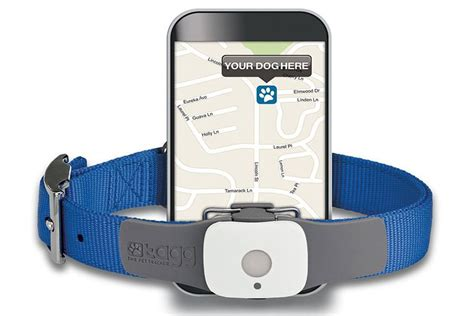 gadgets for pets tagg pet tracker buying tips
