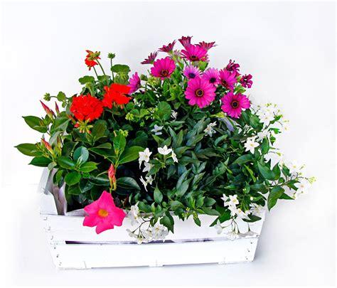 cassetta legno la cassetta fiorita cose di casa