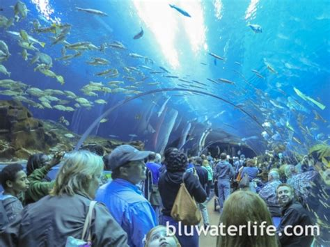 Lu Aquarium 2015 aquarium whale sharks