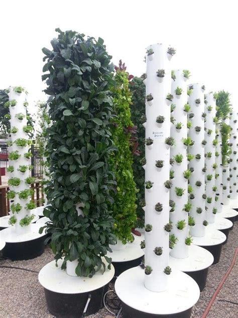 vertical garden  hydroponics  summerland