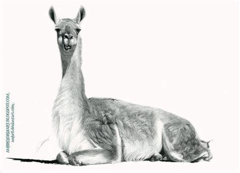 sketchbook lama llamas on the run by techgnotic on deviantart