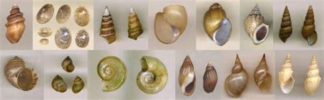 Freshwater Molluscan Shells