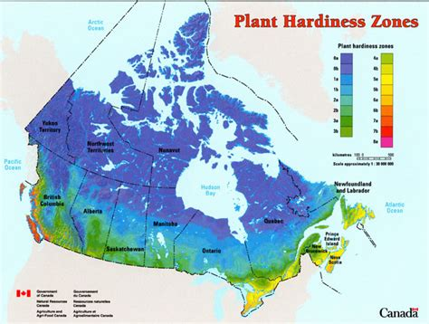 garden zones california plant hardiness zones what can you grow successfully