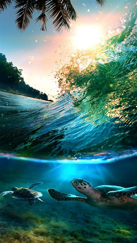 tropical sea island turtles  htc  wallpapers