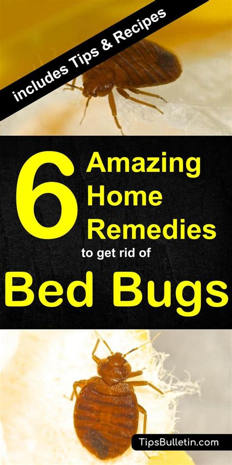 How To Get Rid Of Bed Bugs In A by 6 Home Remedies To Get Rid Of Bed Bugs Incl Recipes