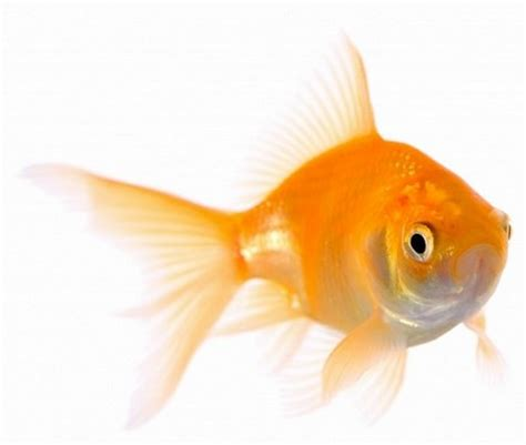 the virtually networked enterprise letting small fish act