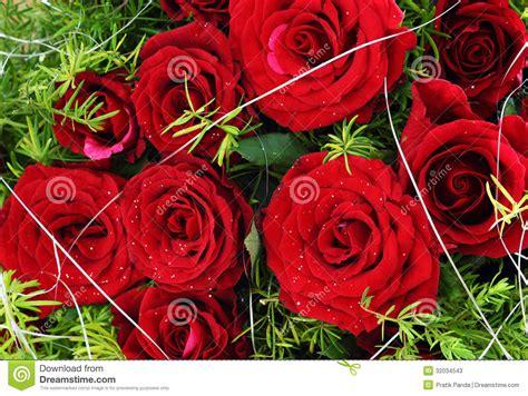 rosas goticas de amor imagui manojo color de rosa del amor rojo rosas imagen de
