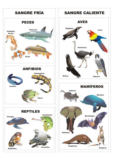 los animales vertebrados clasificaci 243 n de los animales vertebrados plagda infantil