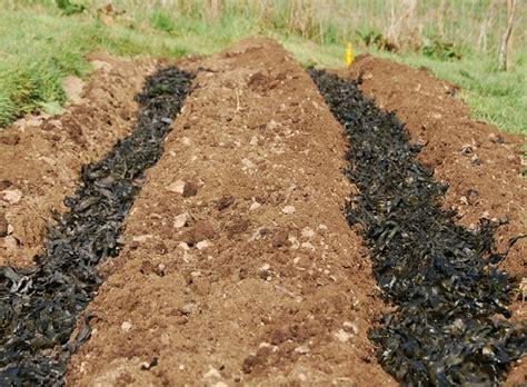 Backyard Potatoes by How To Grow Your Own Potatoes Backyard Garden Lover