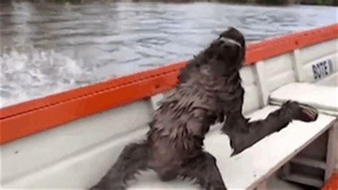 fast boat gif random funny gif random gif boat sloth sloth gif slow