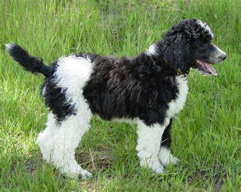 Anak Anjing Gambar Anjing Ras Foto Anak Anjing Lucu Feedage 22956120