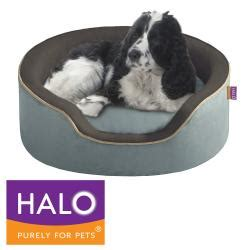 halo dog bed halo unisuede oval cuddler free shipping on orders over