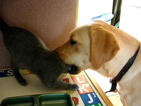 do dogs eat cats dogs cats www pixshark images galleries with a bite