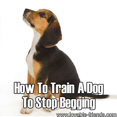 how to a to beg how to a to stop begging lovable friends