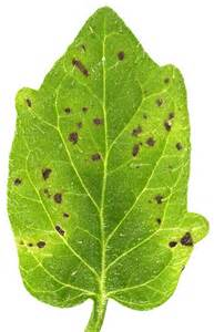 Diseases Caused By Microorganisms In Plants - opinions on plant pathology