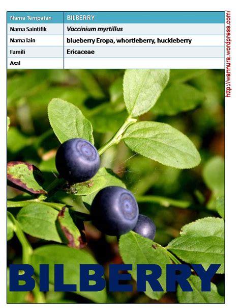buahan wannura buahan wannura halaman 6
