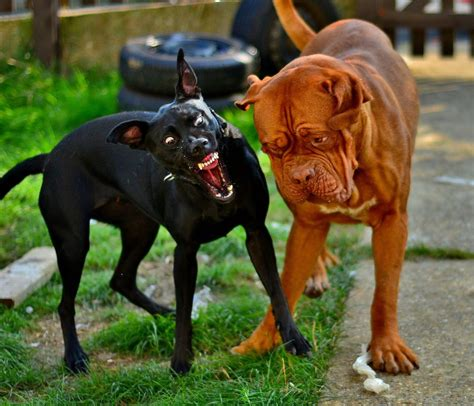 rabid dogs 10 facts about rabies