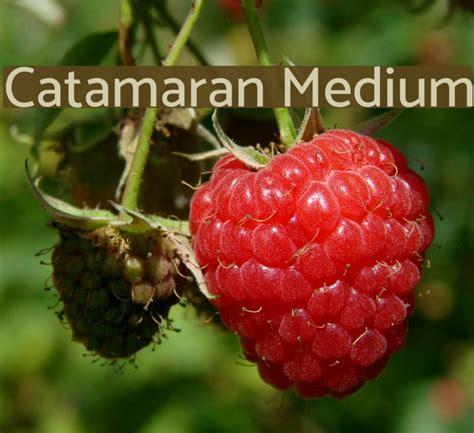 catamaran font download catamaran medium font comments