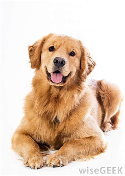 house dogs breeds domestic dog breeds