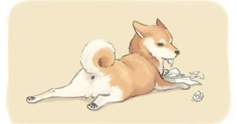 all about the shiba inu shiba inu drawing a shiba puppy getting into