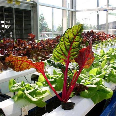 build  indoor hydroponic vegetable garden dengarden