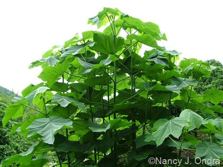 Short Flowering Shrubs - cut back shrubs hayefield