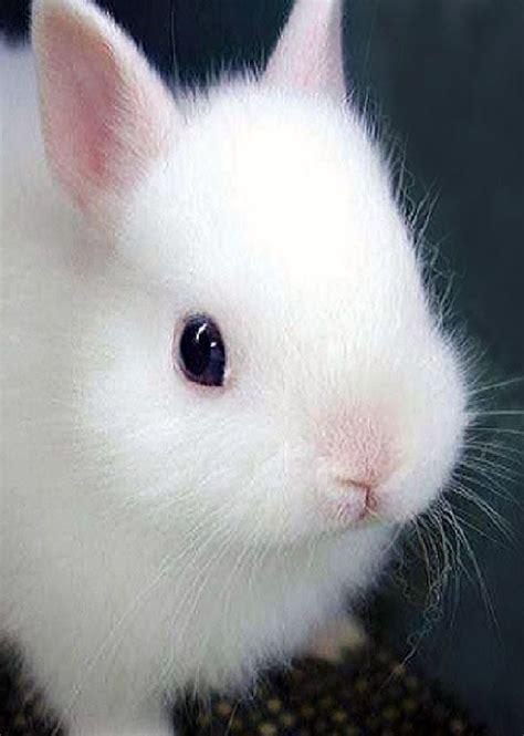 conejitos   cute bunny pictures super cute
