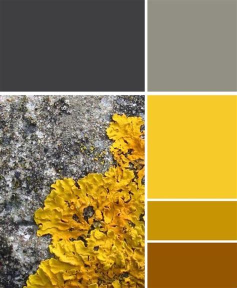 gray and yellow color schemes this colour scheme is great the beauty of nature the