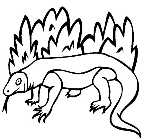 coloring pages of komodo dragon komodo dragon animal coloring pages