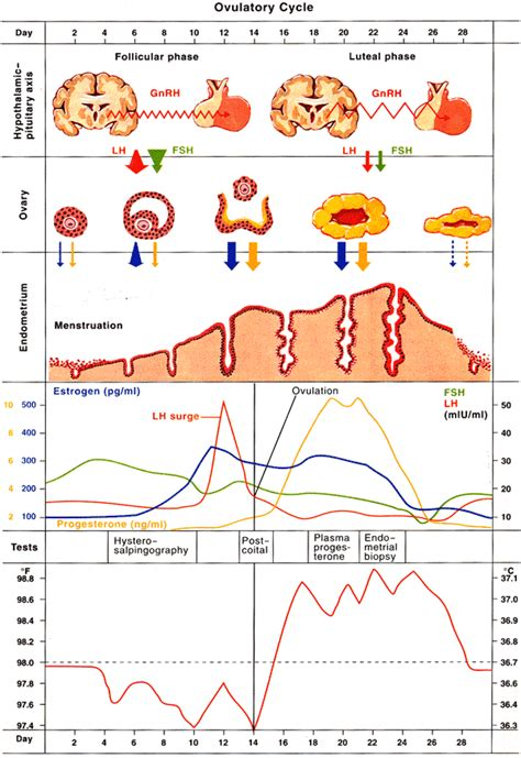 Menstrual Cycle After Cesarean Section by Women S Health Maternity Care Whitecoatpocket