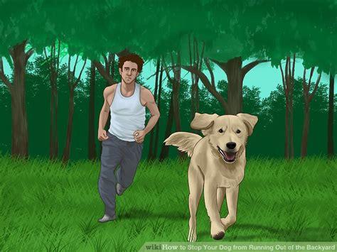 dog escapes backyard dog escapes backyard outdoor goods