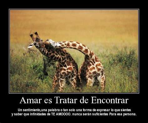 imagenes de jirafas romanticas im 225 genes de animales con frases de amor
