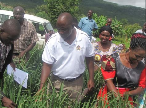 malawi zodiac times latest news chitipa farmers adopt improved agriculture technologies