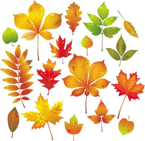 google images fall leaves autumn leaf drawing google search graphic stuff