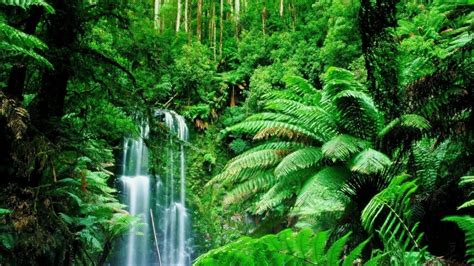 amazon jungle tropical rainforest amazon rainforest feel the rainfall of leaves found the